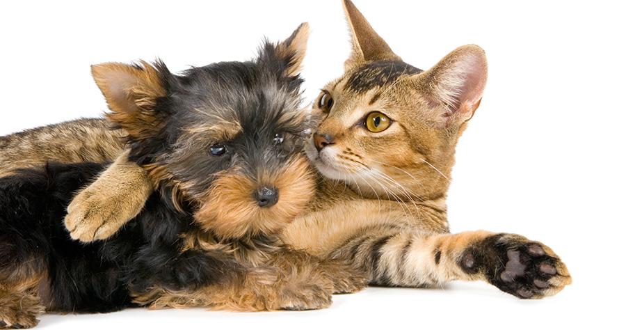 Adopt a Furry Friend