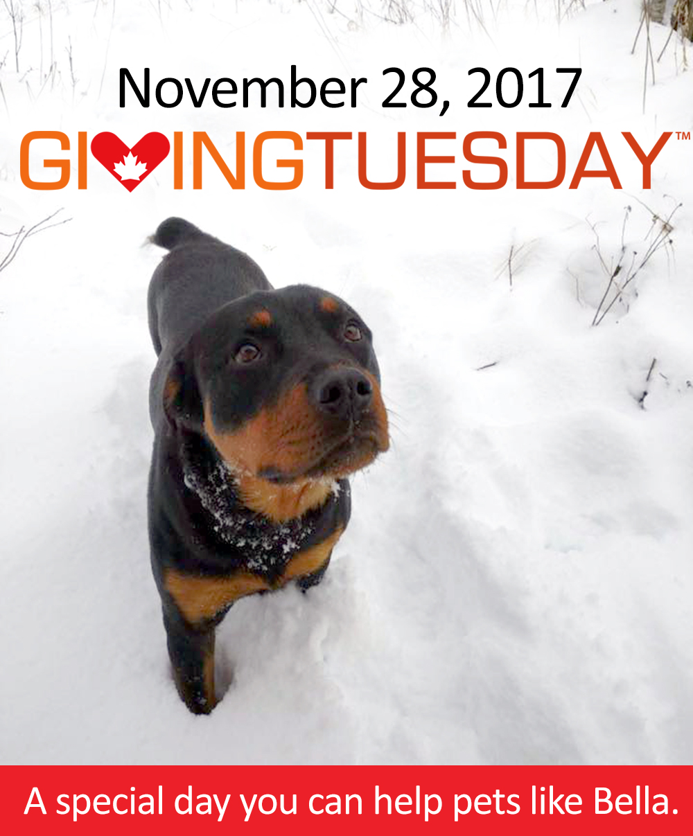 Bella-Giving Tuesday 2017