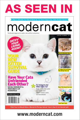 Nobody's Cats featured in Modern Cat